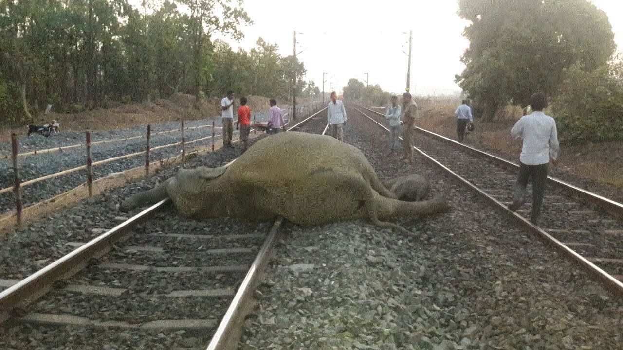 Four elephants die after being hit by speeding train