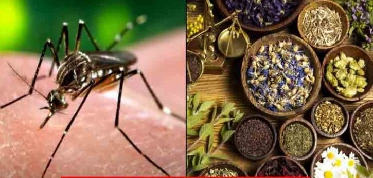 Scientists make Ayurvedic drug to cure dengue