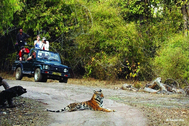 State tiger reserves attract tourists' influx this summer