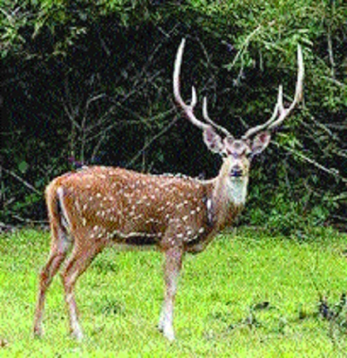 Protect wildlife, but do not victimise hapless farmers: HC