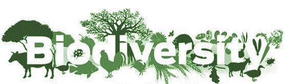 MP Biodiversity Board invites applications for award till 30th