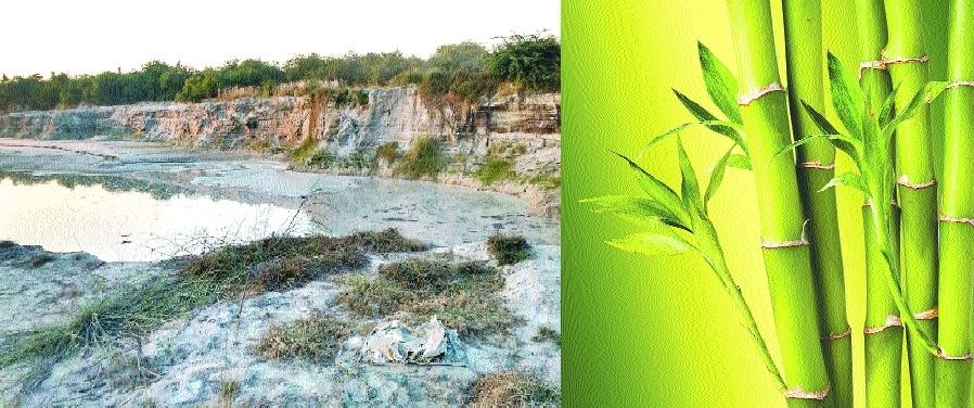 Green belt for suppressing fly ash menace at Khaparkheda