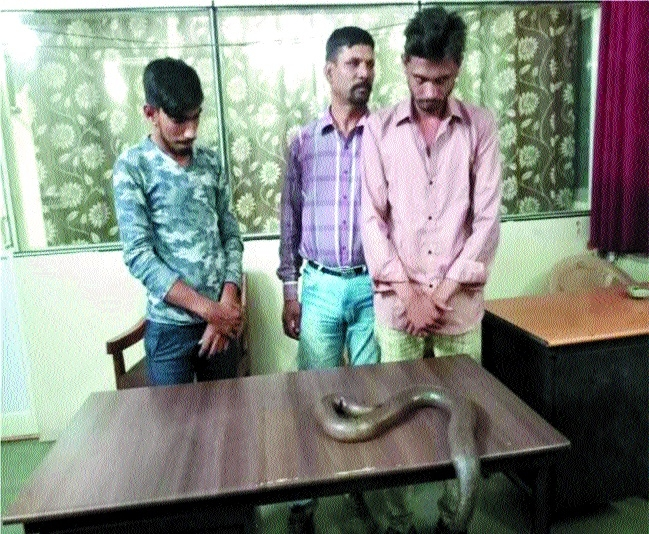 Five held for trying to sell two-headed snake Sand Boa