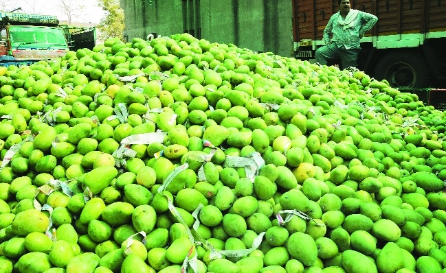 Mango prices up due to short supply