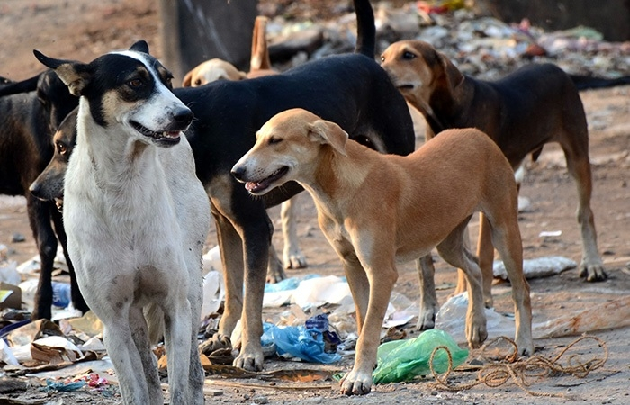 Ferocious dogs maul 12-yr-old girl to death in Sitapur