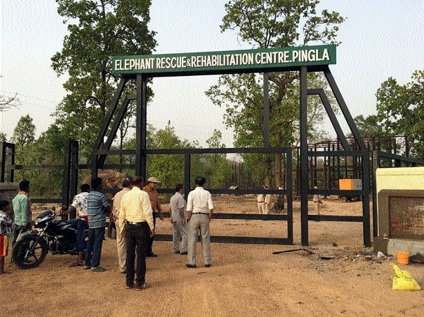 Rescue, rehabilitation centre in Pingla aims at less man-elephant conflict