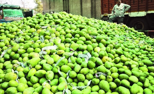 Mango sellers suffer heavy losses due to rains