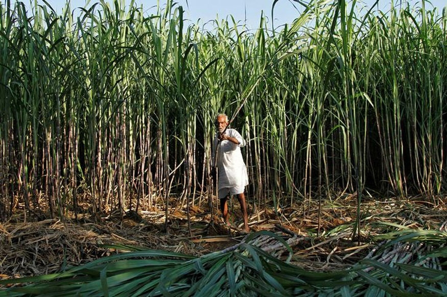 Govt to pay Rs 1,540 cr to sugarcane farmers