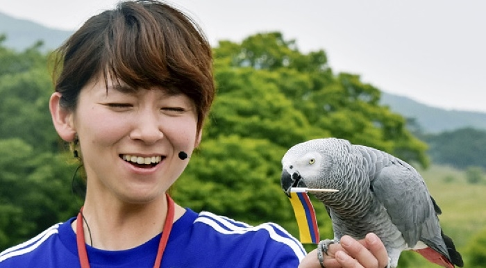 Psychic parrot tips Japan to fall off perch
