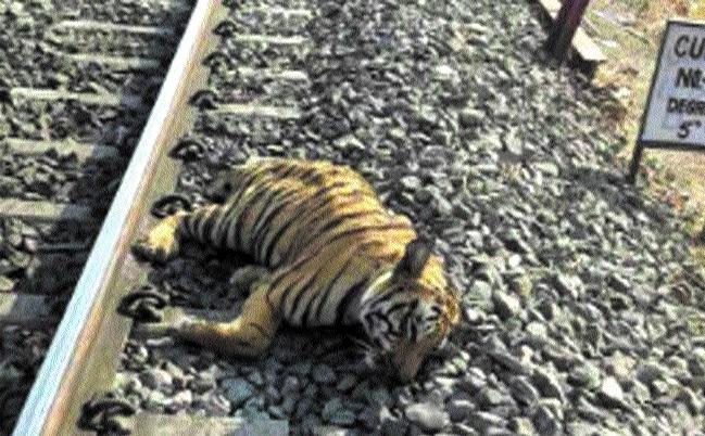 Railways to regulate speed of trains to 25 kmph near Ratapani