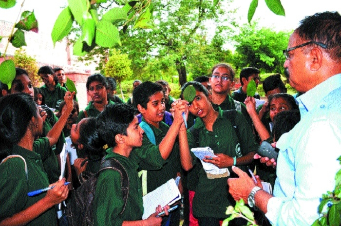 RMNH organises tree identification programme