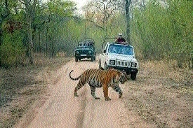 Singh directs officials to develop tiger safari at Dumna Nature Park