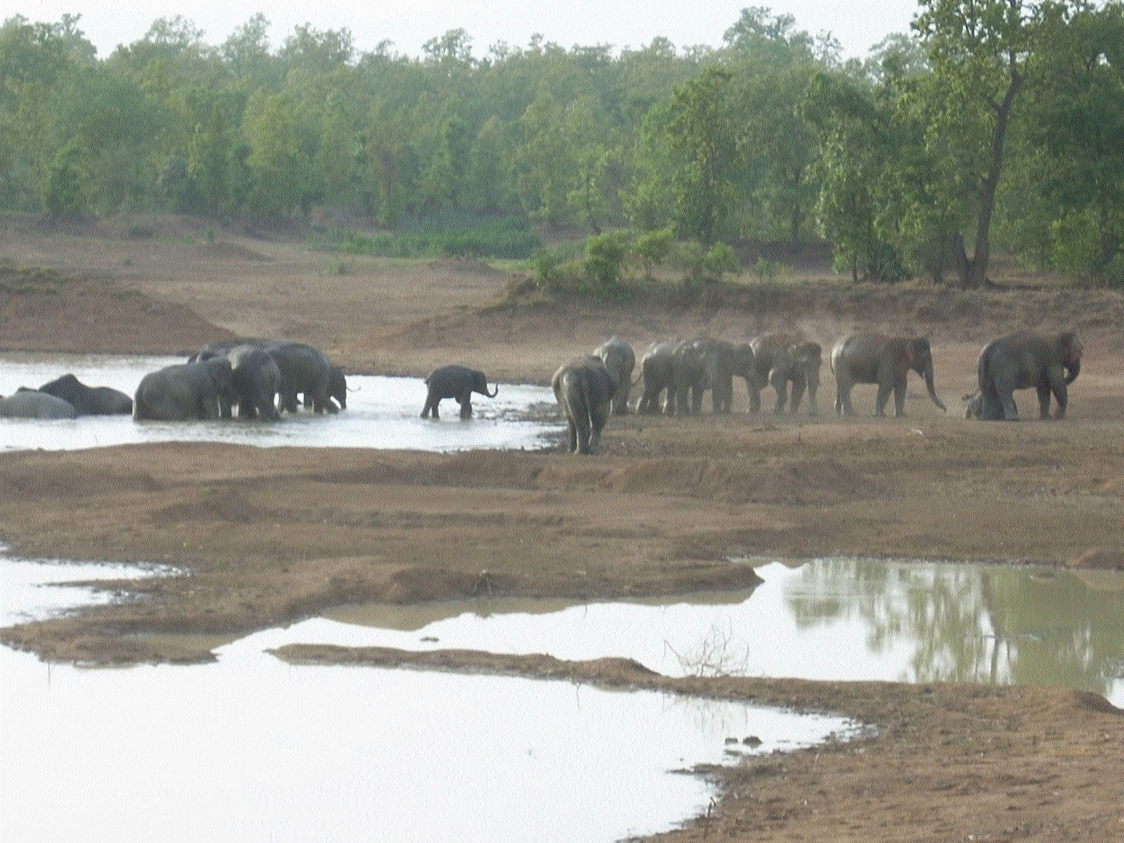 Jumbos destroy standing crops in several villages