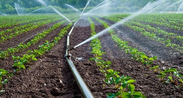 85,559 Ha of irrigation potential created in Vid in 4 yrs