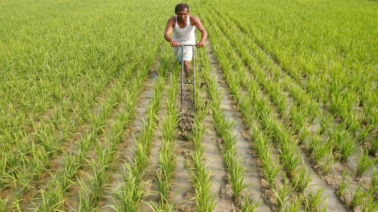 Dip in crop loan disbursement by banks continues to worry admin