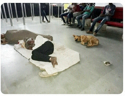 Passengers share space with dogs at Kareli station's waiting hall