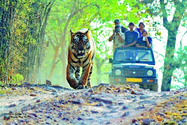 Foreigners to get western toilet facility inside tiger reserves