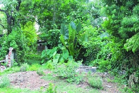 Dense bushes posing threat of snake bites in BSP Township