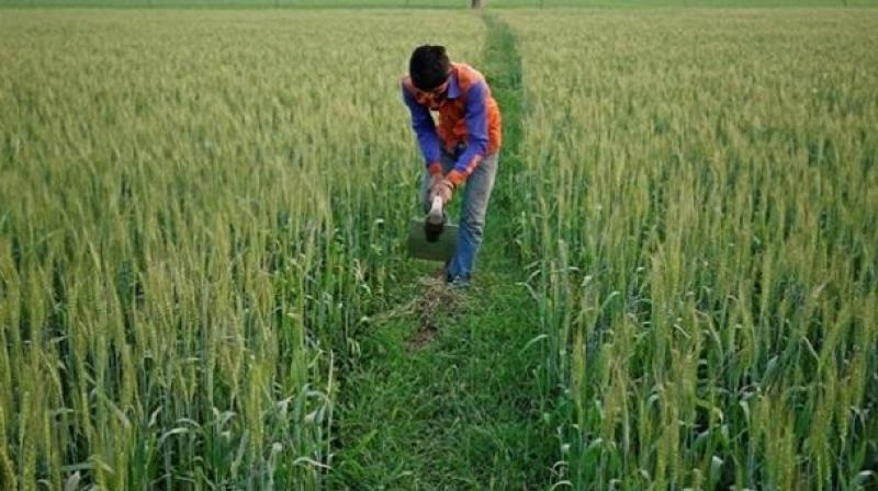 MSP hike to boost farm income, spur growth: Assocham