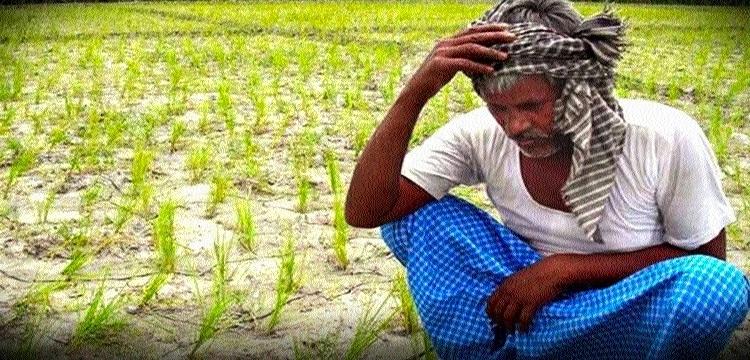 Deficit rainfall leaves farmers distressed