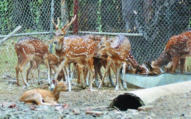 Red-tapism hinders release of excess deer, blue bulls in zoo