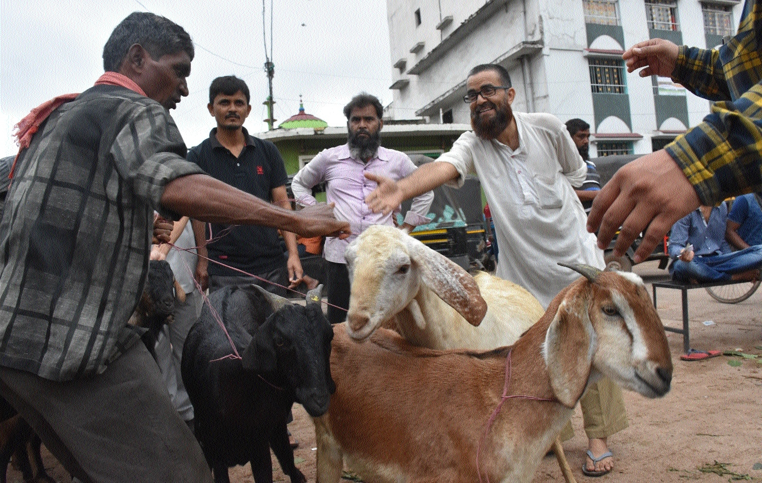 Goats available in plenty this Eid; rates dip