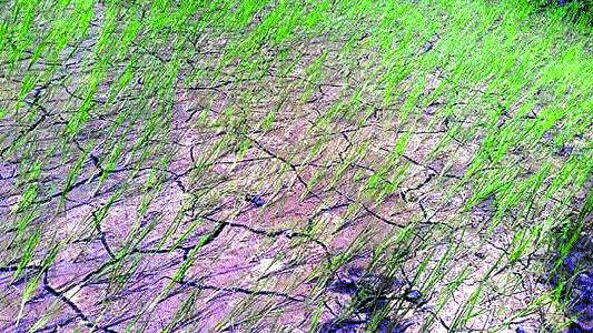 Farmers in Waraseoni face bleak future