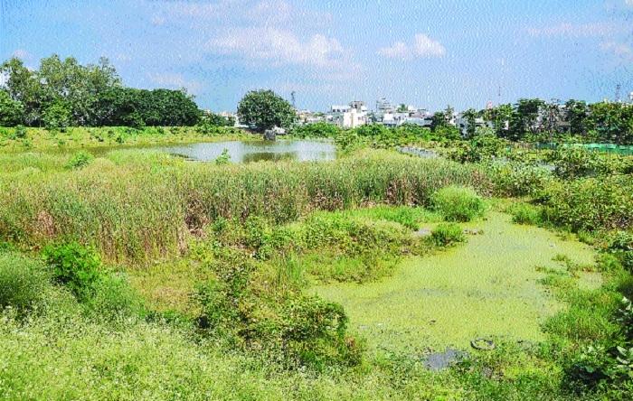 Mourn, oh city! Pandhrabodi lake is dying