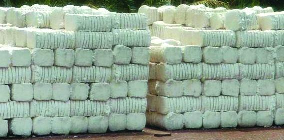 CAI retains cotton crop estimate at 365 lakh bales for FY2017-18