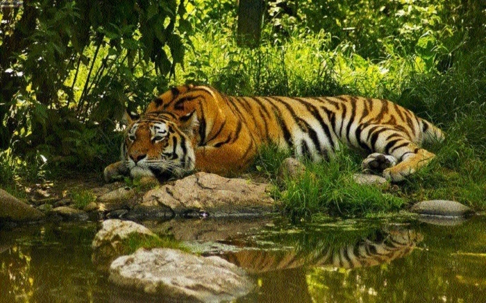 Kerwa forest officials having sleepless nights as tigress spotted sans 2 cubs