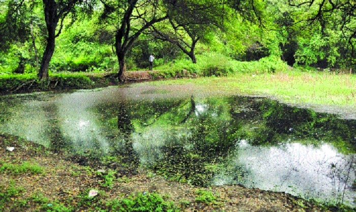 Police Line Takli Lake: A pristine natural bird habitat turned into sewage dump