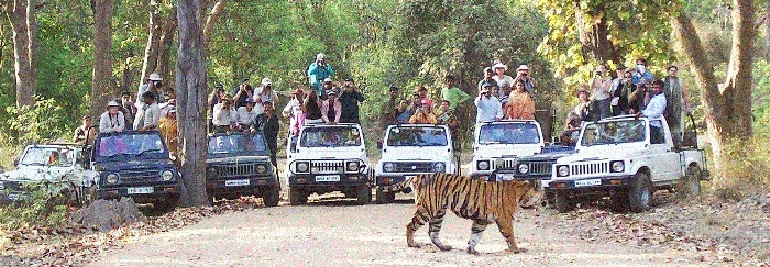 National parks in MP cannot increase tourist capacity