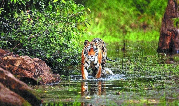 Notification to make Ratapani a safe tiger reserve delayed
