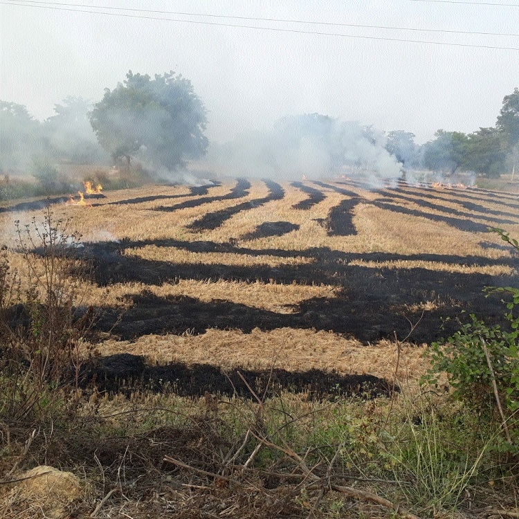 Despite ban, farmers still burning their fields