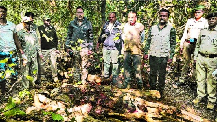 Half-eaten carcass of tigress found in MP