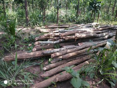 Forest losing green cover at rapid pace