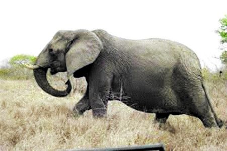 Elephant menace continues in few districts