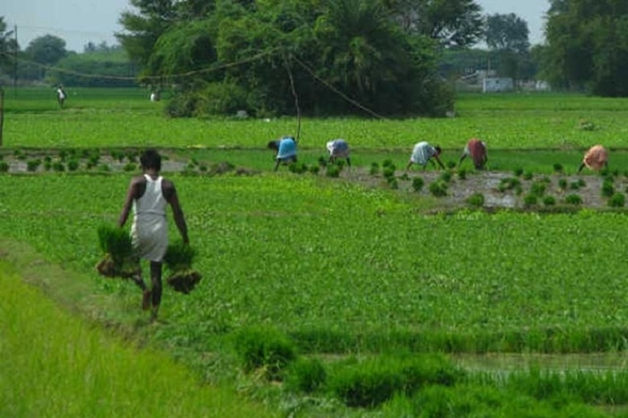Govt plans to launch ease of doing agri-biz index