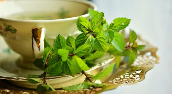 Pudina: A global herb that helps digestion