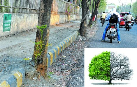 City heading to bury 'Second Greenest' tag