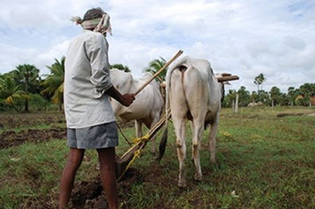Over 51,000 farmers get Rs 21 cr drought aid in Mah