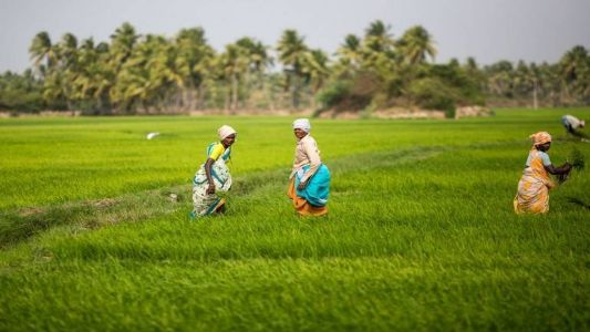 Budget should focus on food processing to boost farmers' income: Experts