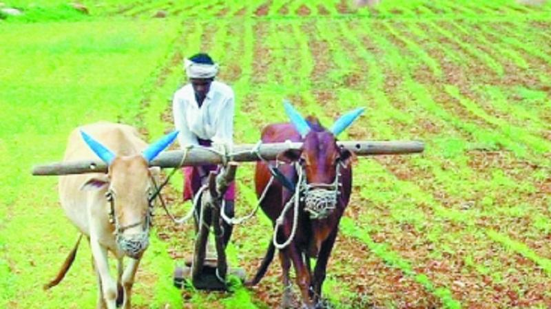 Farm loan write offs touc