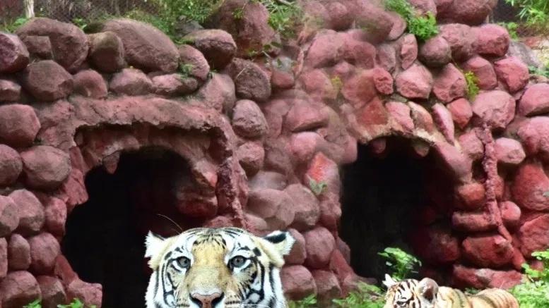 Hyderabad Zoo_1&nbs