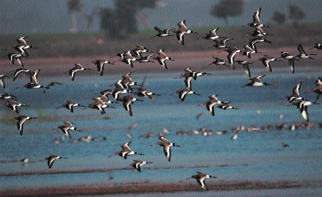 Migratory birds_1&n