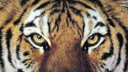 Man-animal conflict: Felines kill two persons in last 48 hours in Chanda