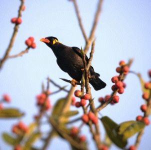 C'garh lacks recovery plan for endangered wildlife