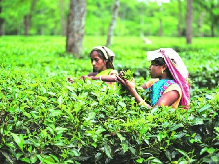 Tea exports slide by 3 in