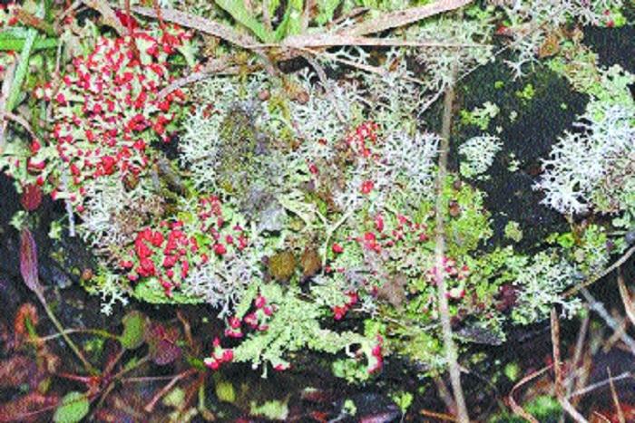 lichen garden_1&nbs