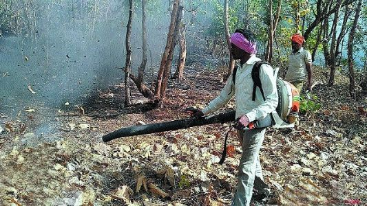 Significant reduction in forest fires in Nagpur Circle